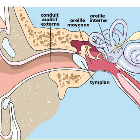 Barotraumatismes des oreilles et des sinus, attention à la reprise de la plongée !