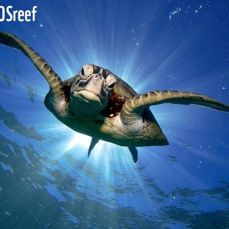 Les associations de protections de la vie marine