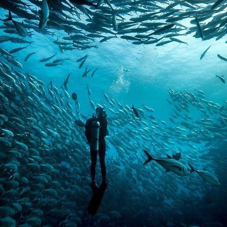 7 raisons d'être reconnaissant d'être plongeur !