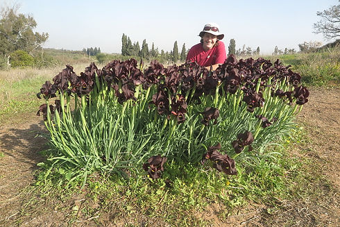 IMG_9016 Abby with irises_OFS.jpg