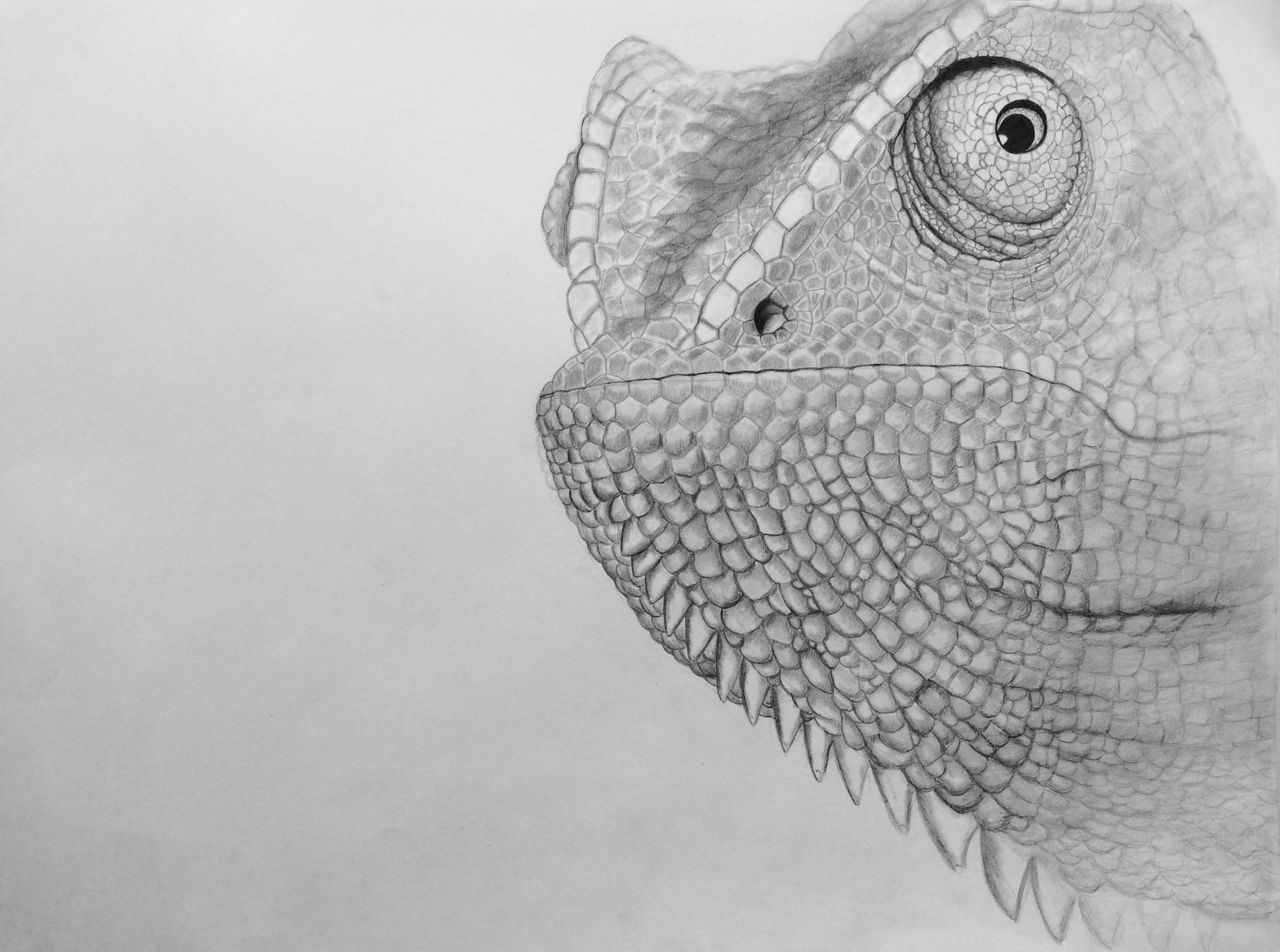 The Colorblind Chameleon