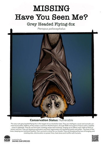 B5-Grey_Headed_Flying_Fox_DPIE_L_web.jpg