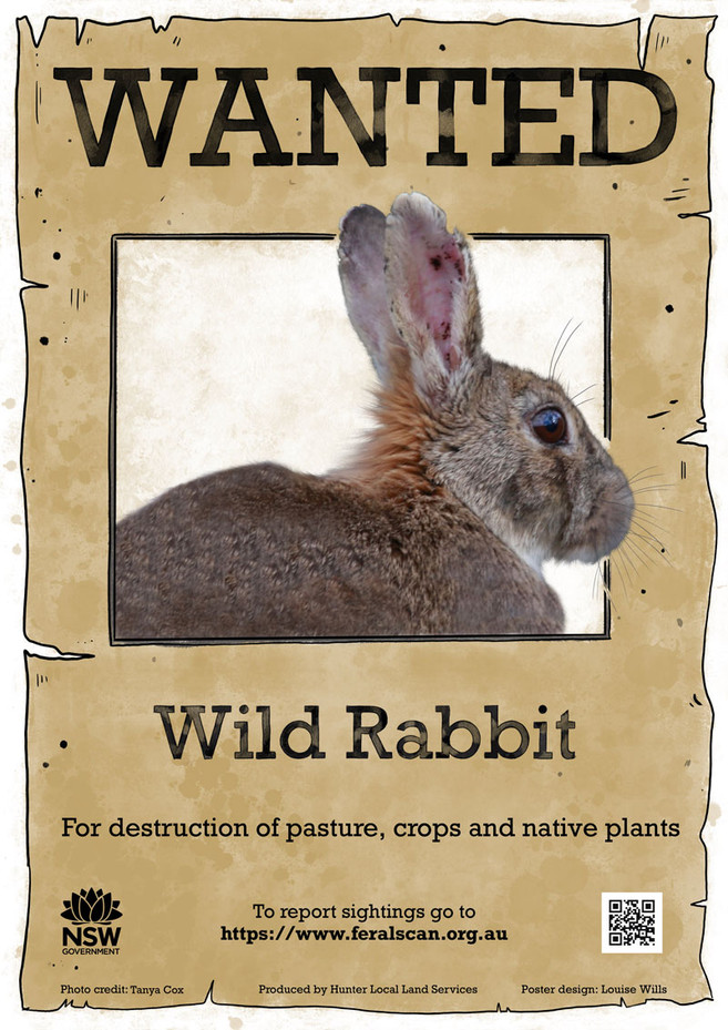 Wild_Rabbit