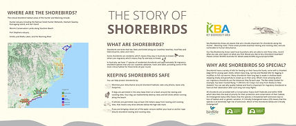 The Story of Shorebirds.jpg