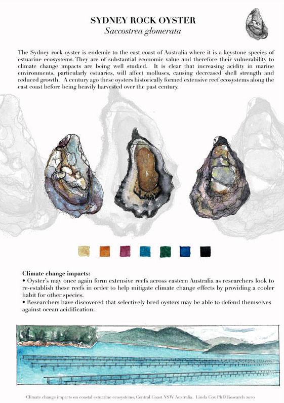Sydney Rock Oyster by Linda Cox_web.jpeg