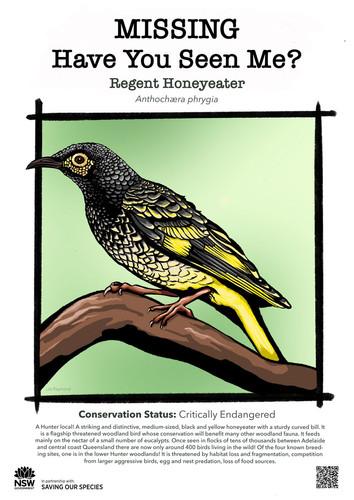 B5-Regent_Honeyeater_DPIE_L.jpg