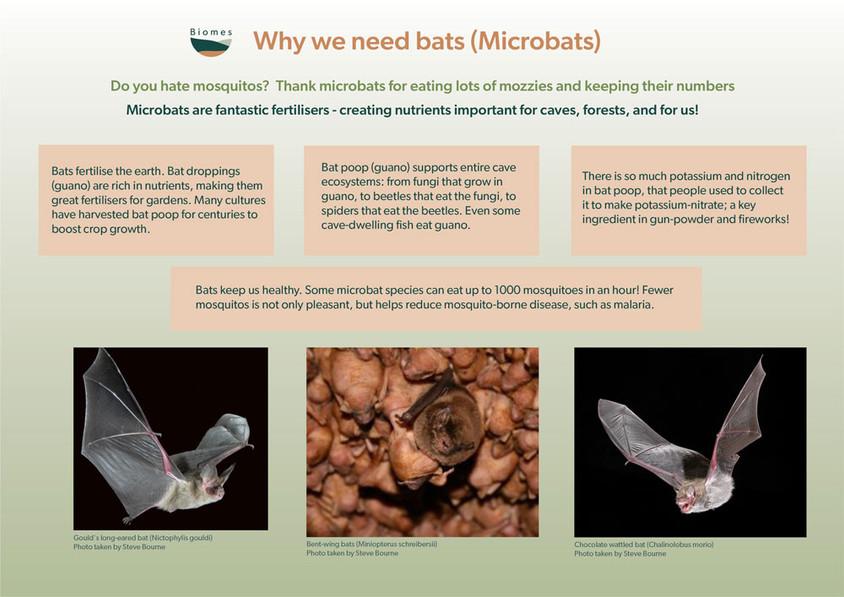 Microbat poster