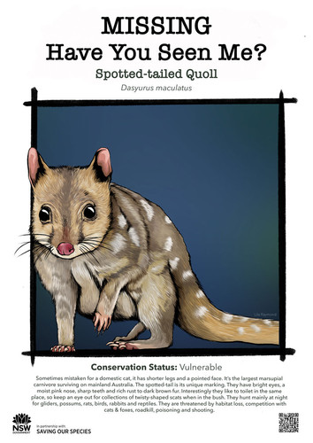 Spotted-tailed_Quoll_DPIE_L.jpg_web.jpg