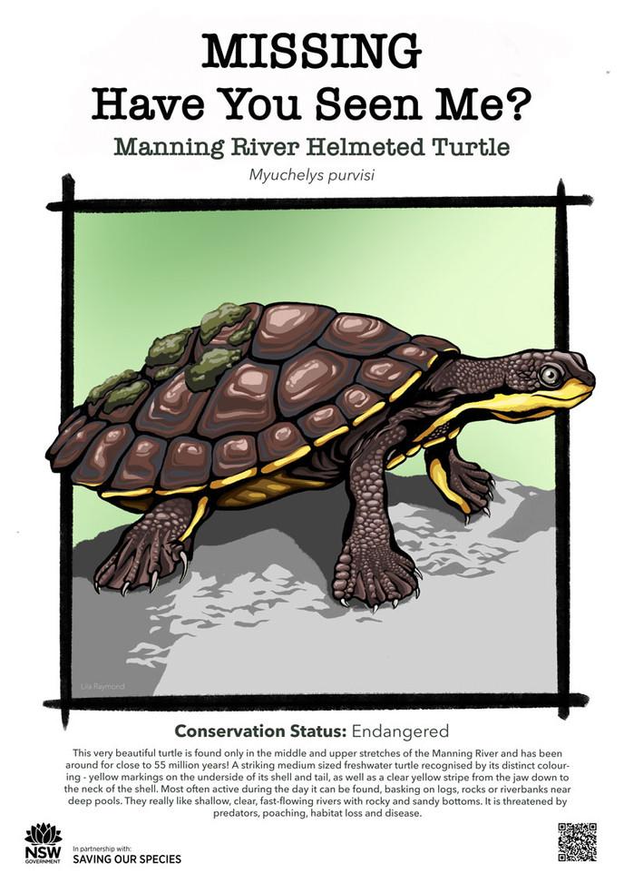 Manning_River_Helmeted_Turtle_DPIE_L.jpg