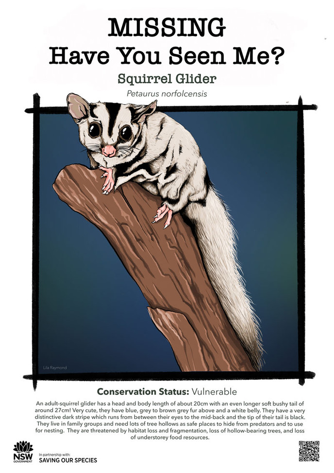 Squirrel_Glider_DPIE_HighRes_L.jpg_web.j