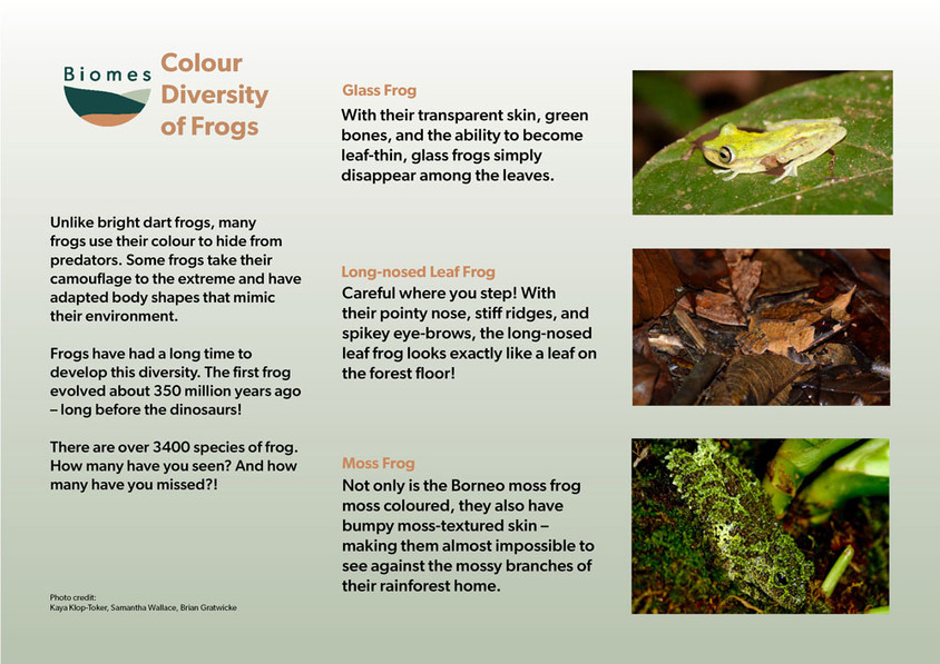 A9 Kaya 2nd colour_diversity_frogs2_web.