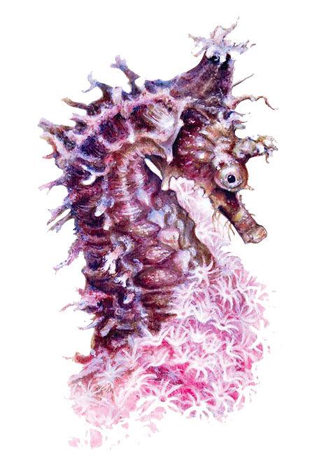 A1-whites_seahorse-decal_web.jpg