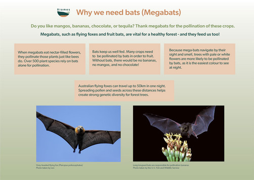 Megabat poster