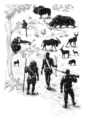 hominid prey preferences Artwork Lillian Webbjpg.jpg