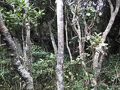 Littora rainforest low res - to be udate