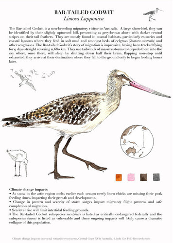 Bar Tailed Godwit by Linda Cox