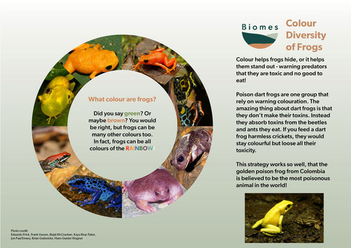 Colour Diversity of Frogs