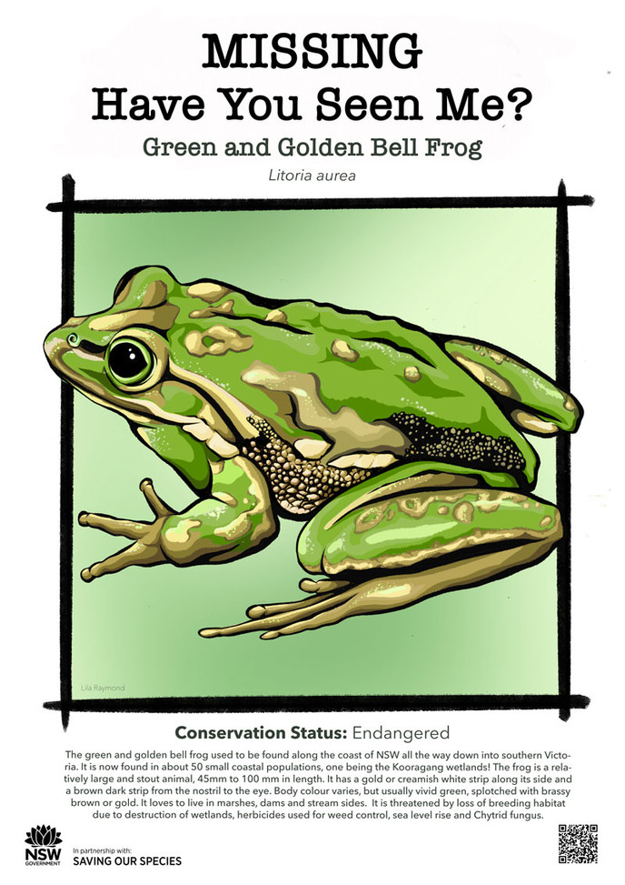 Green_and_Golden_Bell_Frog_L.jpg_web.jpg