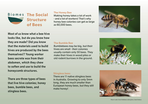 A8 Kaya the_social_structure_of_bees_pos