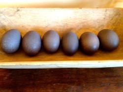 Emu Eggshells Bowl