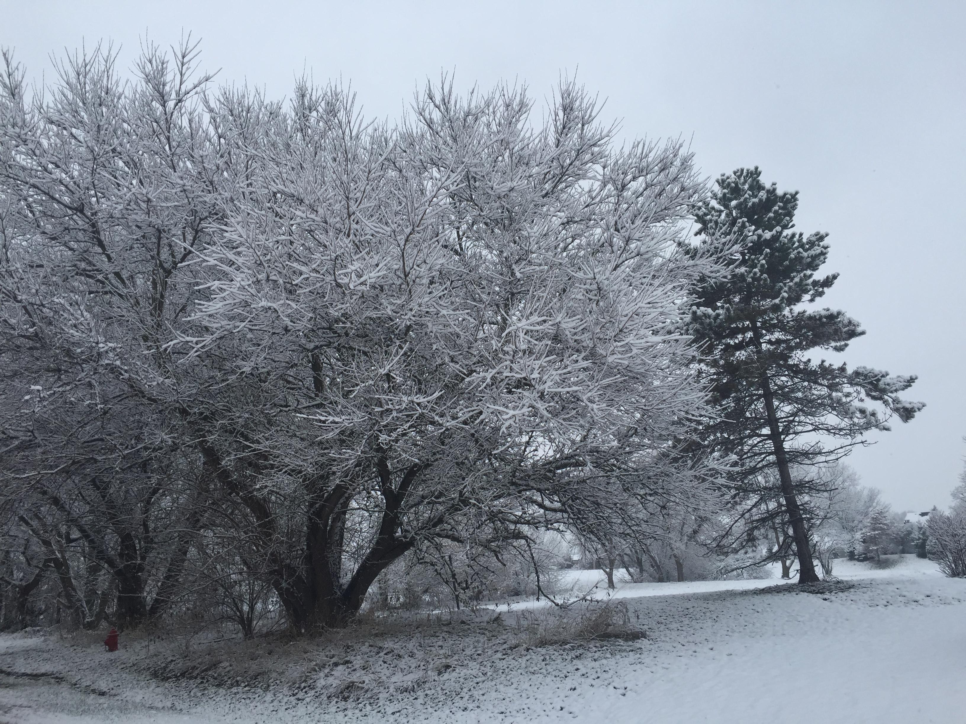 Winter Chill - Lake in The Hills, IL