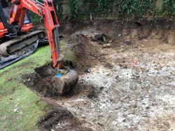 japanese knotweed dig out