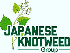 JAPANESE KNOTWEED SURVEY