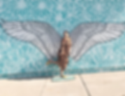 Galt Wings_edited.png