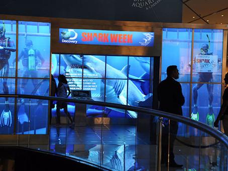 BrightSign and DigiComm's digital shark experience