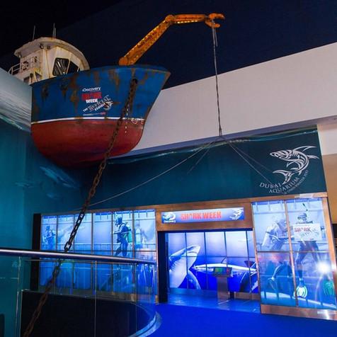 Shark Week Exhibit at Dubai Aquarium