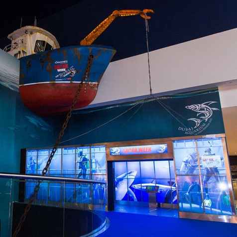 Shark Week Exhibit at Dubai Aquarium
