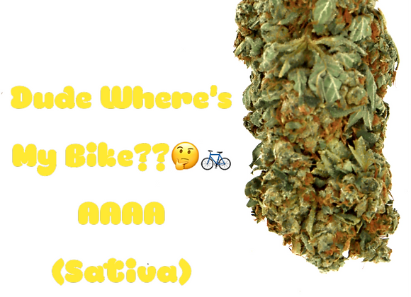 Dude Where's My Bike??🤔🚲 sativa AAAA