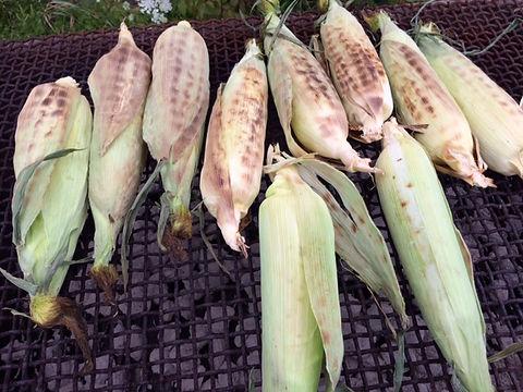 Corn 05.JPG