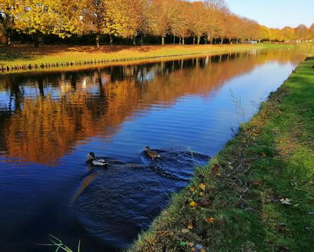 Nederland is een vreedzaam land. De vogels, de dieren, iedereen kan in vrede leven. In mijn land kunnen zelfs de eenden niet zo vrij zwemmen. Die worden meteen afgeschoten. Toen ik deze foto naar een vriend in Jemen stuurde, reageerde hij verbaast: 'zie je eenden gewoon zo zwemmen?'