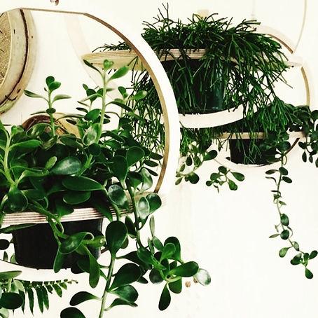 round plywood planter.jpg
