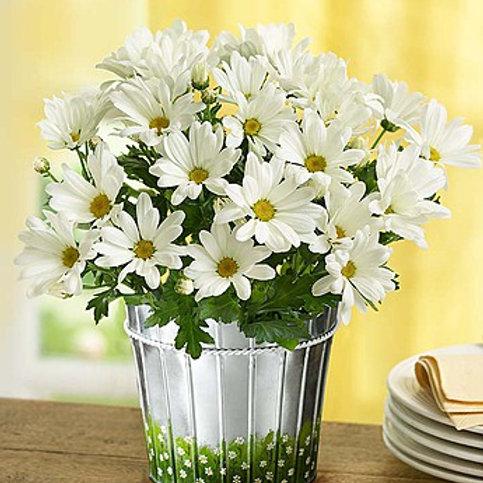 """""""Happy Daise"""" Bouquet"""
