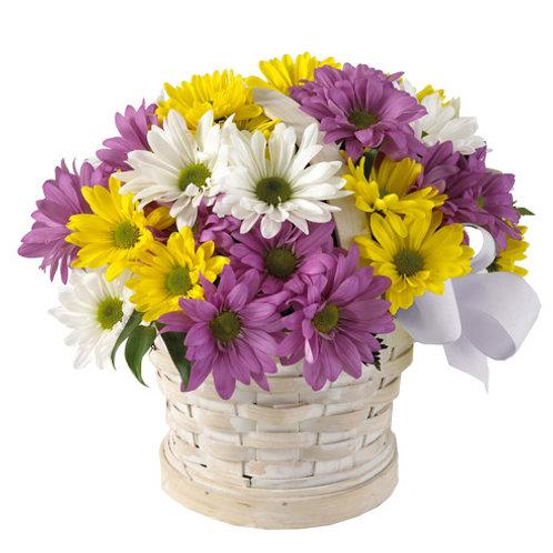 Small Daisy Basket Bouquet