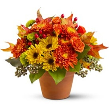 """""""Fresh Daisy"""" Potted Bouquet"""