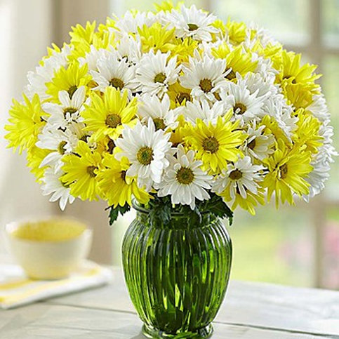 Yellow and White Daisies