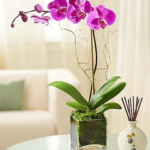 Pink Orchid Bouquet