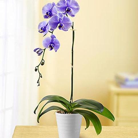 Lavender Orchid Bouquet
