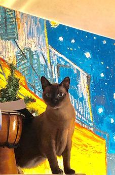 бурма, кошка, коричневая