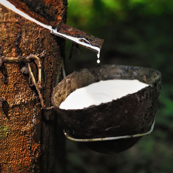 Rubber tree milk for making Omni Soles