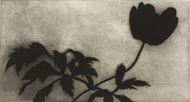 Black-Powerflower-2014-40-x-60-cm 2