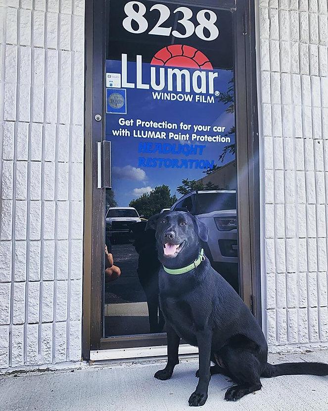 window tinting Kansas City Dog