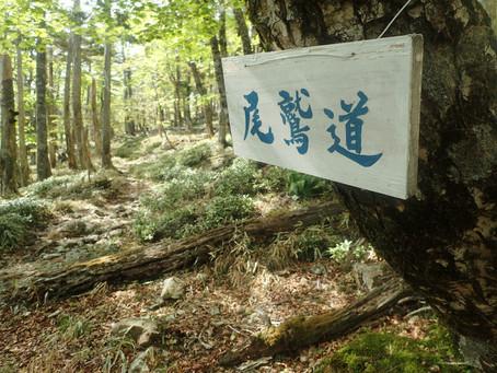[公募プラン]古の尾鷲道を歩く マブシ嶺(コブシ嶺)
