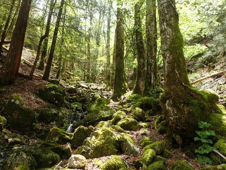 [公募プラン]知られざる大台ヶ原 緑の尾根ルート