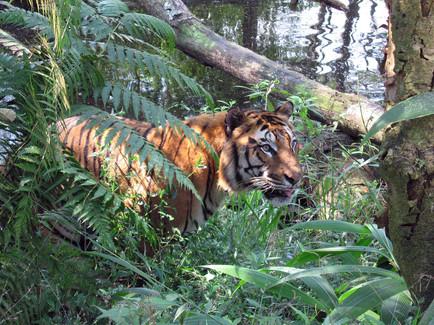 Taman Safari Puncak Indonesia