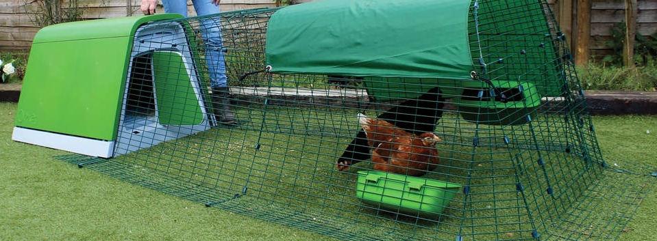 Chicken boarding