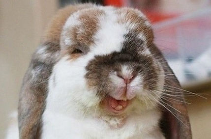 happy rabbit.jpg